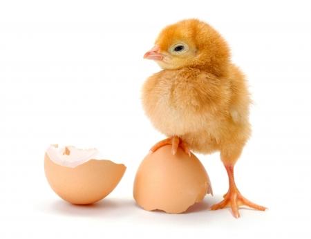 hens in Latvia produce an egg