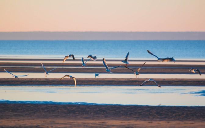 Cyanobacteria detected at Pärnu beach