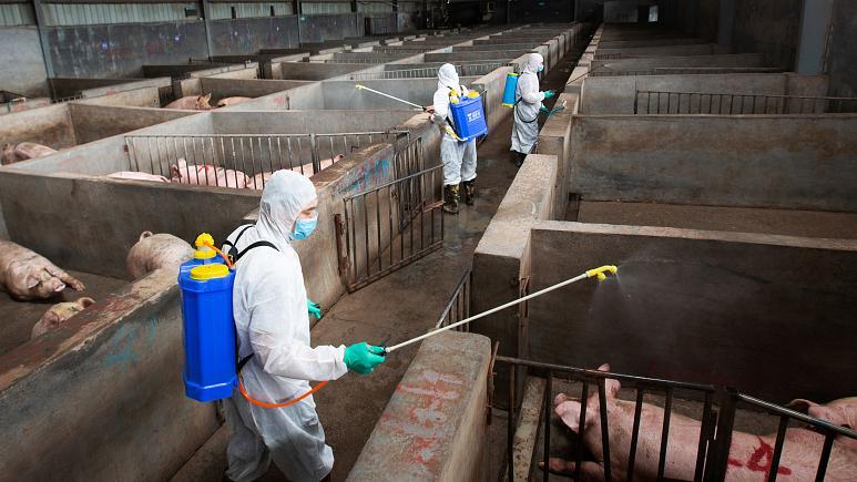 Fresh case of swine fever in Slovakia